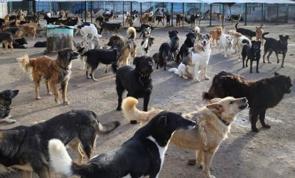 Problems with stray dogs: complications and ways to solve it
