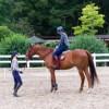 緑豊かな乗馬クラブ、馬好きで明るく意欲のある方、歓迎致します