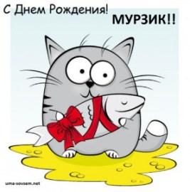 день рождение кота