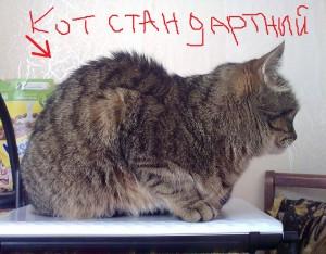 стандартный кот