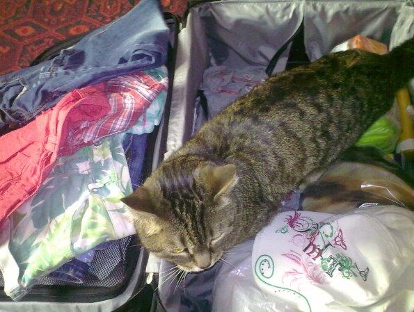 В отпуск с котом