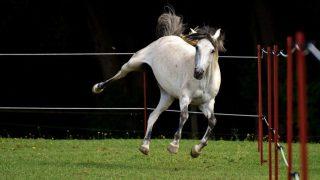地方所属2歳馬の注目馬シリーズ【2】兵庫の無敗馬・アゼツライト、セイヴァーベナ