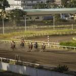 2020サウジカップ・現時点での出走有力馬について【改訂版:日本調教馬の検疫問題に進展あり?】