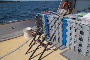 Jigging gear for the sentinel survey