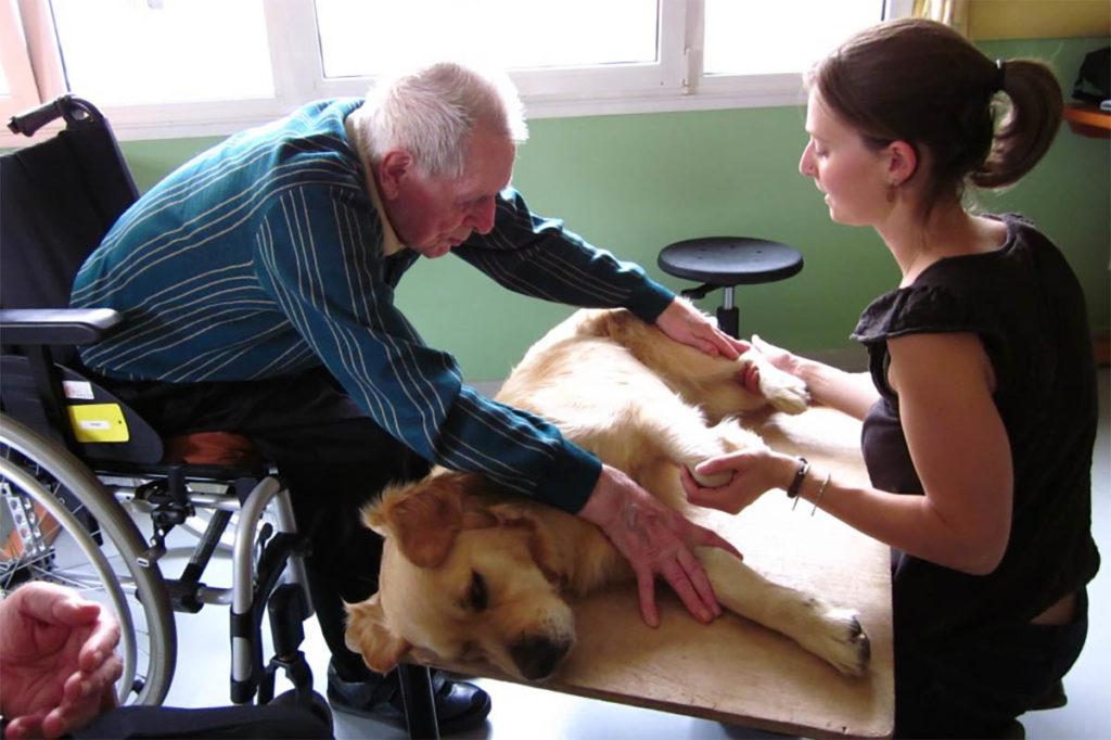 La formation d'intervenant en médiation par l'animal aide les personnes âgées