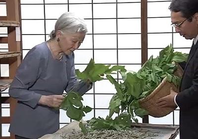 皇后さま、蚕に桑の葉与える「ご給桑」