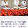 厳選されたイチゴ、三笠宮家へ