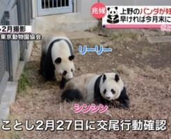 上野動物園パンダが交尾