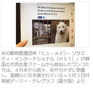 犬を食べる野蛮な韓国人