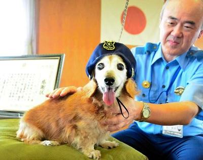 老犬ルーシーお手柄 泥棒逮捕に貢献