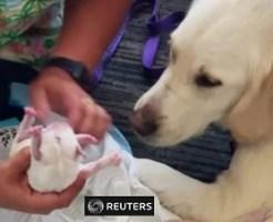 フロリダ空港で突然出産した介助犬