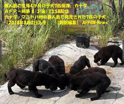 無人島で生後4か月の子犬7匹保護、カナダ