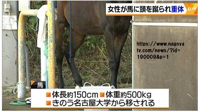 名古屋大学の学生が馬に頭を蹴られて意識不明の重体