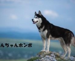 原始的な犬の特徴や飼い方