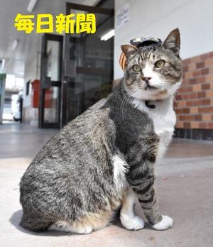 """""""猫駅長""""が入院 ファン「芸備線とともに復活を」"""