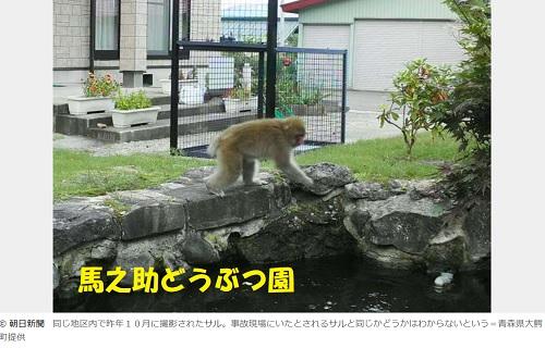 民家に出没する猿青森