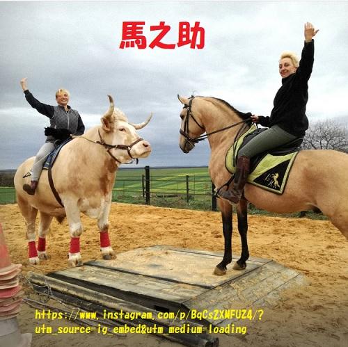 食用牛が馬になった