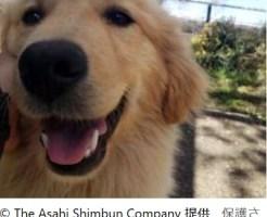 保護された犬のうちの1頭「でん」。ショーで活躍する犬として特訓を受けています=宇都宮動物園の飼育員ブログ