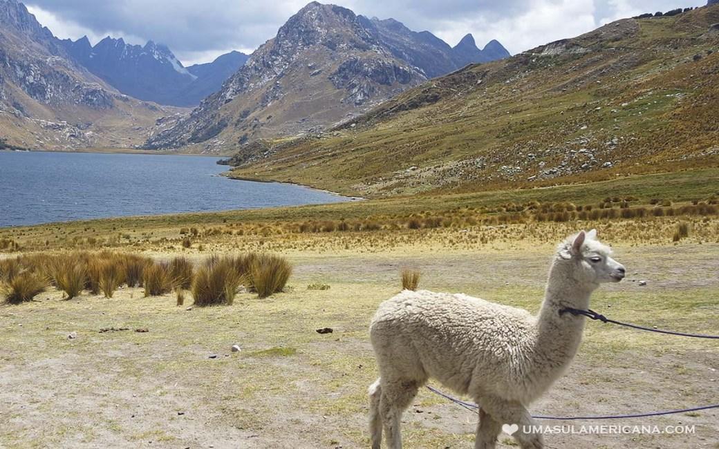 Chavín de Huantar - Passeio pelas ruínas arqueológicas perto de Huaraz, no Peru