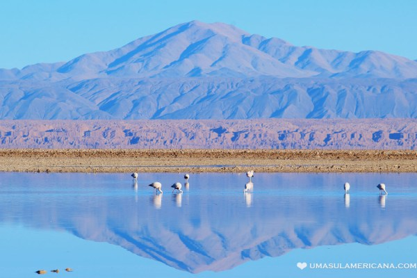 Quanto custa Atacama - Laguna Chaxa