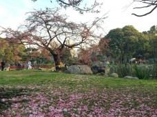 Parques de Palermo em Buenos Aires - Jardim Japonês