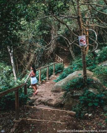Viagens de 2018 - Brasil - Florianopolis - mata atlântica
