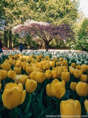 Como visitar o Keukenhof - parque de flores na Holanda20
