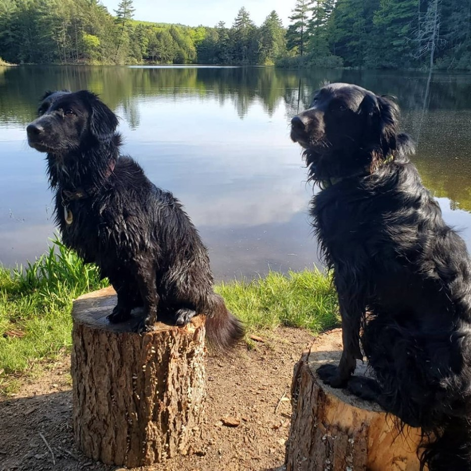 Dogs on logs with shadows