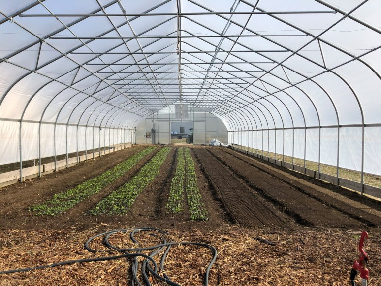 green house with spring mix