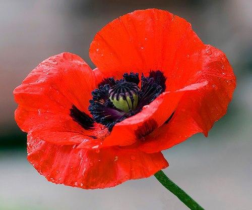 UMD Commemorates 100th Anniversary of Armistice Day
