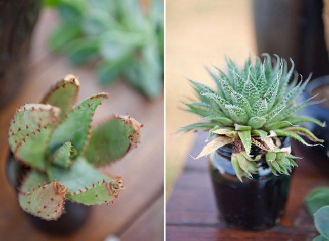 um-doce-dia-casamento-inspiracao-protea-verde-africana-08