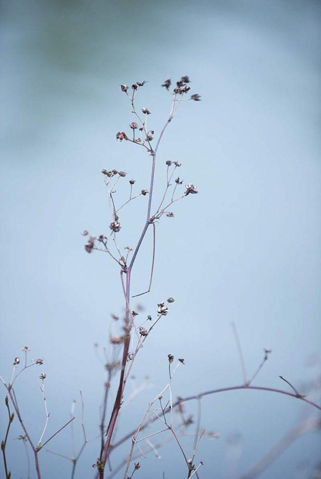 um-doce-dia-decoracao-de-inverno-casamento-paixao-azul-04