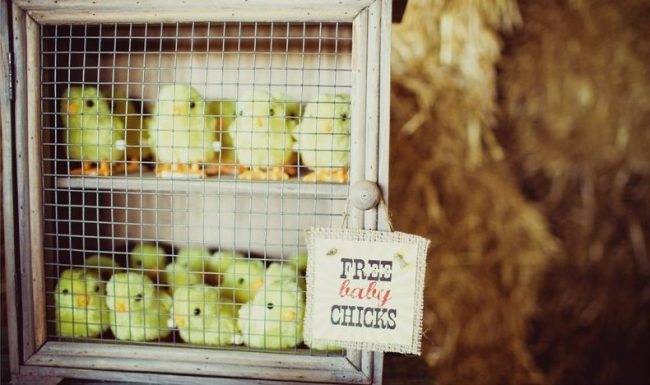 um-doce-dia-festa-de-aniversario-brincando-de-ser-fazendeiro-12