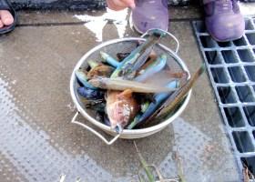 えさ探しからはじめる サバイバルフィッシング(釣り体験) 2014年9月15日