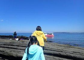 この季節は海の生き物に出会えるチャンスも多い楽しい時期 5/13/2017