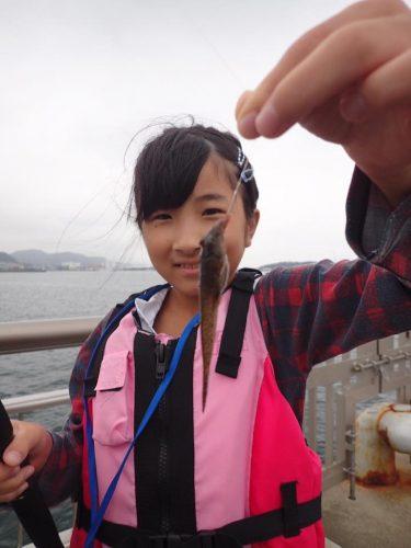 メゴチ釣れました。