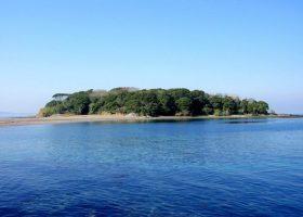 海辺の鑑定団の活動日程