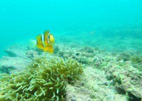 夏の沖ノ島の様子を伝えます! サンゴに出会えるスノーケリング体験実施中!
