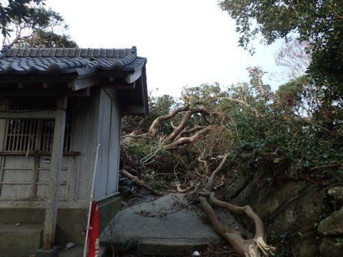宇賀明神の後方にあった樹齢300年の御神木が倒木