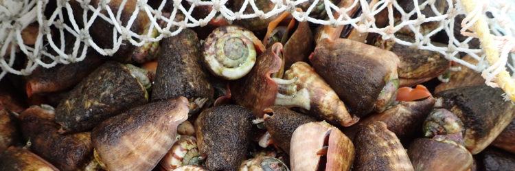 海人倶楽部 貝とり漁コース