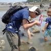 鎌倉海岸生物観察会