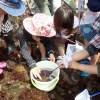 江の島海岸生物観察会が始まりました!