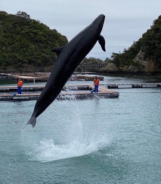 くじらの博物館で撮影したクジラショーの写真