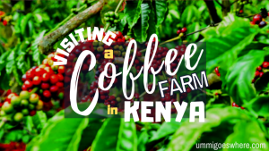 Visiting a Coffee Farm in Kiambu, Kenya | Ummi Goes Where?