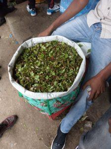 Khat leaves.
