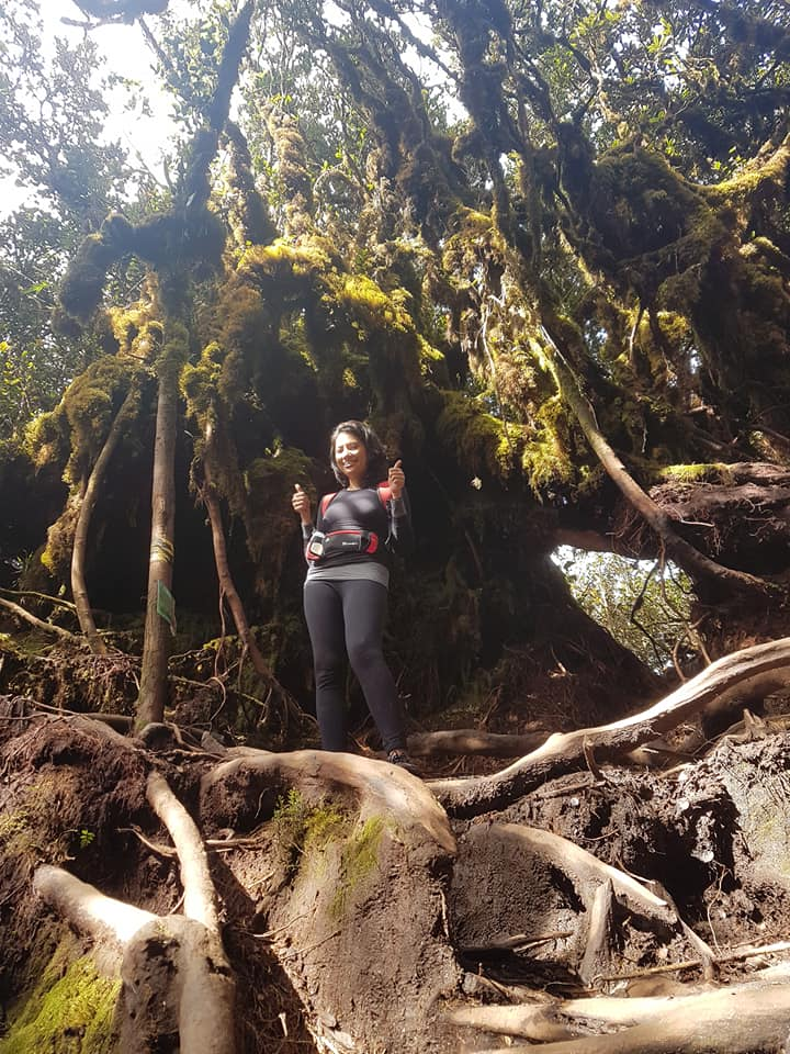 Climbing Mount Irau Mossy Forest