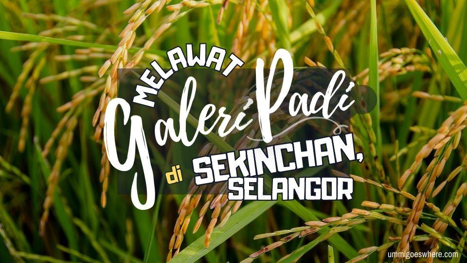Galeri Padi Muzium Padi Sekinchan | Ummi Goes Where?