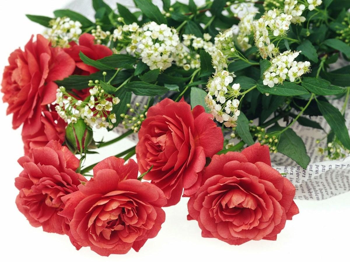 ✓ Download Gambar Bunga Cantik Bergerak