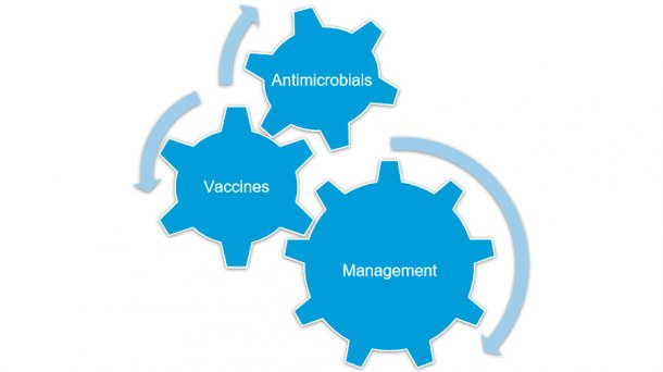 overall-mycoplasma-hyopneumoniae-control-is-effectively-achieved-when-combining-various-strategies_126971.jpg