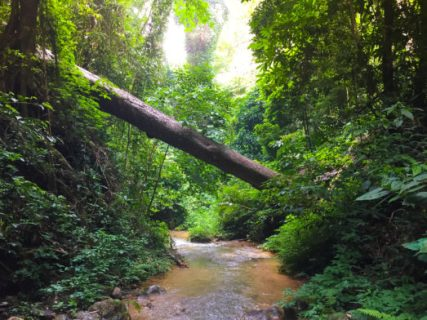 Forest in Chiang Mai a location in Thailand for video production